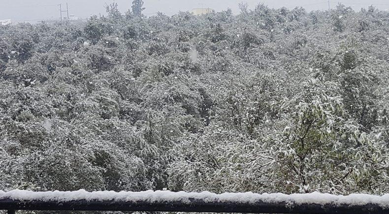 Olivenhain im Schnee