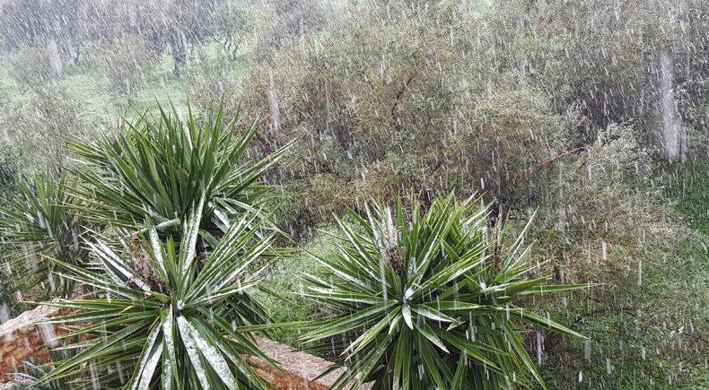 Verschneite Palmen im Nachbargarten
