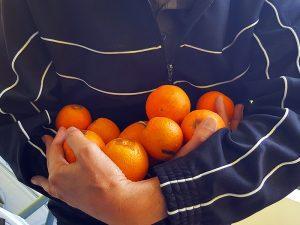 Orangen auf Kreta