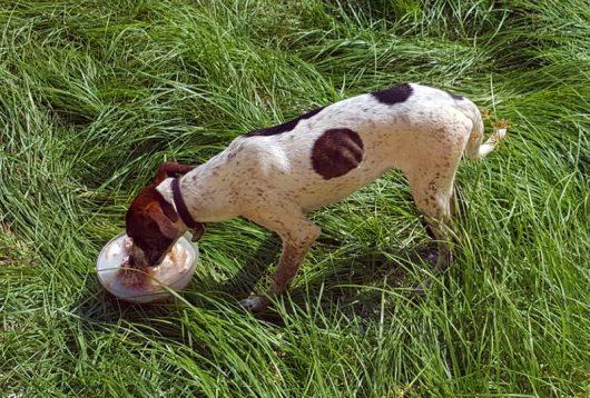 Hund: Unser Schützling beim Fressen