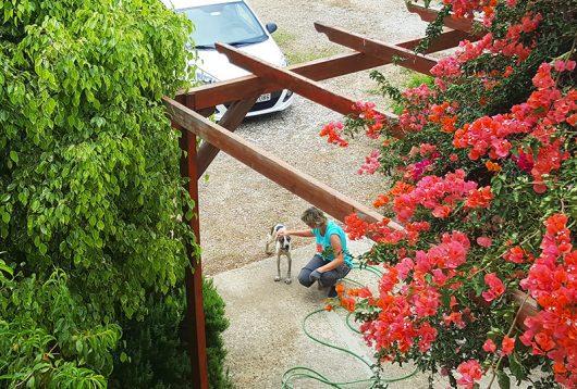 Unser Hund hilft bei der Gartenarbeit