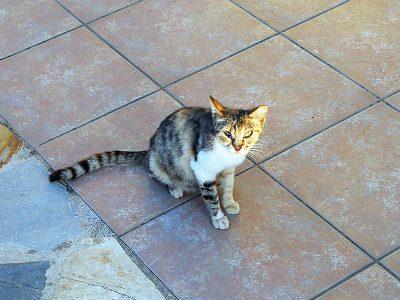 Katze im Haus