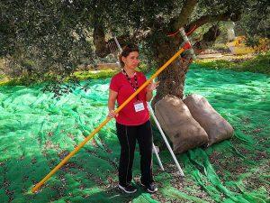 Gerätschaft für die Olivenernte