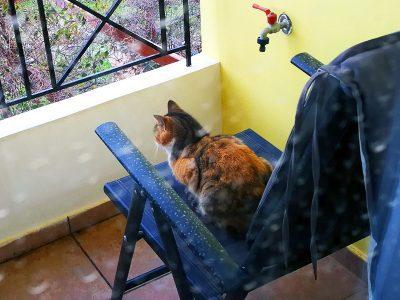 Kater auf unserem Balkon
