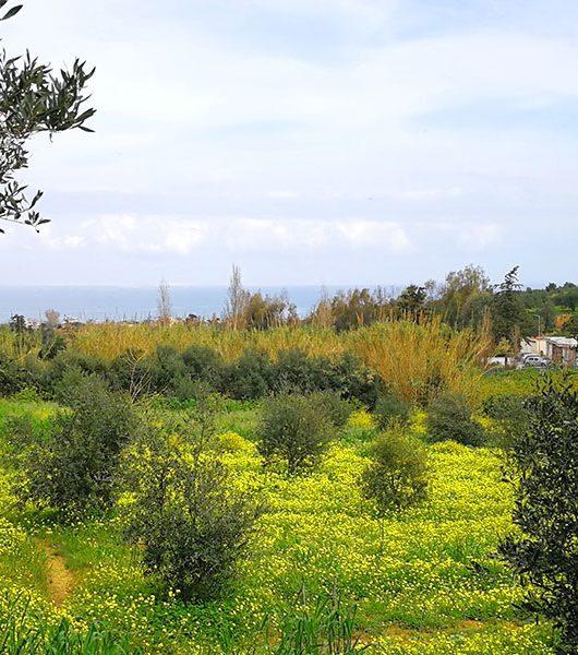 Blick an die Küste nach Gerani