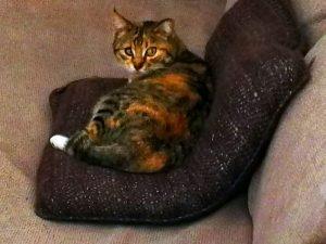 Miezi auf der Couch