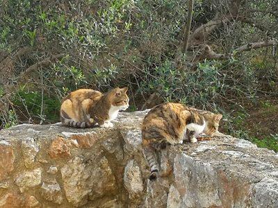 Katzenfreunde: Ab jetzt nur noch im Doppel