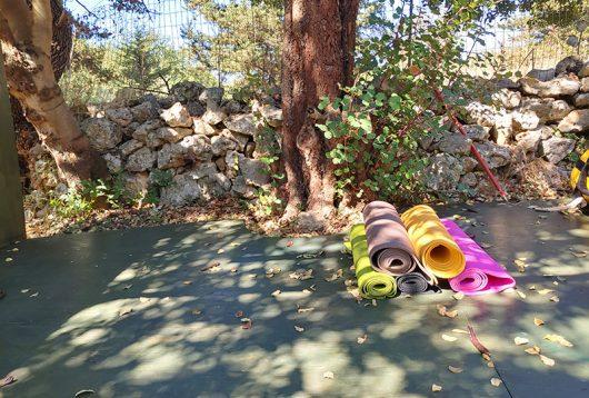 Yoga in der Olivenfarm
