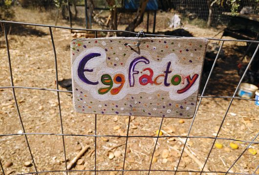 Egg factory bei The Olive Farm